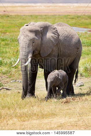 Elephant mother and baby. Full length portrait in Amboseli National Park Kenya.