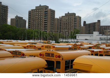 School Buses, Brooklyn