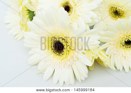 Beige gerbera flowers on wooden table close up