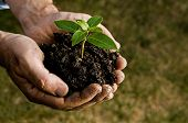 picture of environmental protection  - Farmer hand holding a fresh young plant - JPG