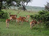 pic of s10  - dis was clicked in masai marakenya using nikon coolpix s10 - JPG