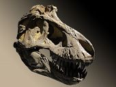 foto of giant lizard  - A skull fossil dinosaur on brown background - JPG