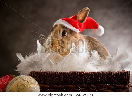 Dwarf Rabbit Wearing A Santa Claus Costume