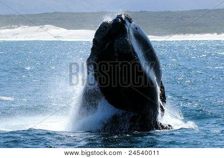 SR Whale Close Breach.