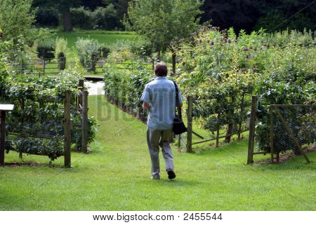 Man Walking In Garden Towards A Pond.