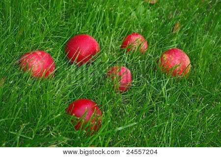 Red Apple In Grass