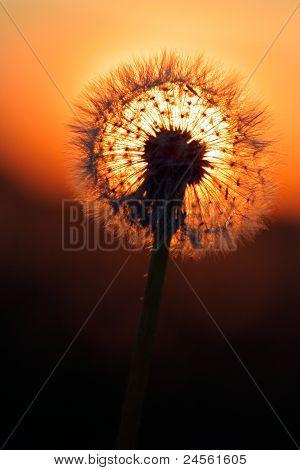 Feuerball und Sonne