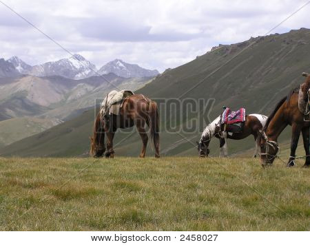 Horses In Tien Shan Mountains