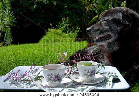 Tea on the farm