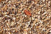 stock photo of threshing  - Colorful and crisp image of corn threshing waste - JPG