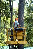 picture of boom-truck  - Man climbs high in lift of utility truck to trim limbs off the trees - JPG