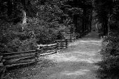 The Lonely Path: Where Lincoln Walked As A Young Boy In Lincoln State Park--indiana, Black And White poster