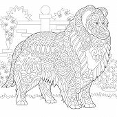 Rough Collie Dog. Shetland Sheepdog Or Sheltie. Coloring Page. Colouring Picture. Adult Coloring Boo poster