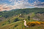 Forli-cesena, Emilia Romagna, Italy: Landscape Of The Apennine Mountains With Flowering Broom, Dirt  poster