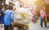 Back view of Nepalese man carrying a heavy load of bananas on a bike poster