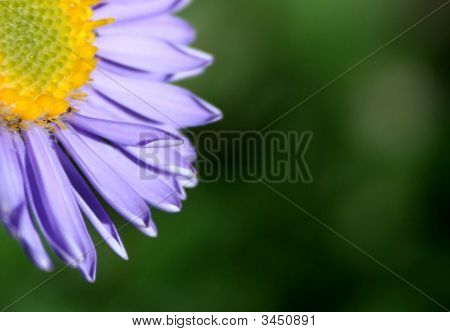 Purple and yellow flower on the green