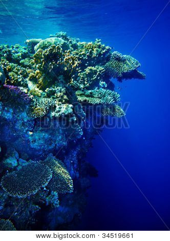 Underwater life of coral reef. Beautiful of nature.