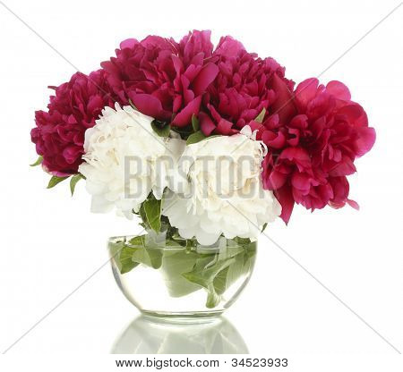 beautiful pink and white  peonies in glass vase isolated on white
