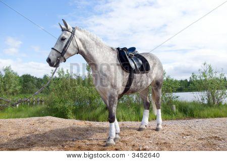 Racehorse Outdoor