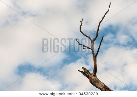 Dry Branches In The Blue Sky