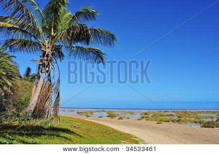 oasis in Sotavento Beach in Fuerteventura, Canary Islands, Spain