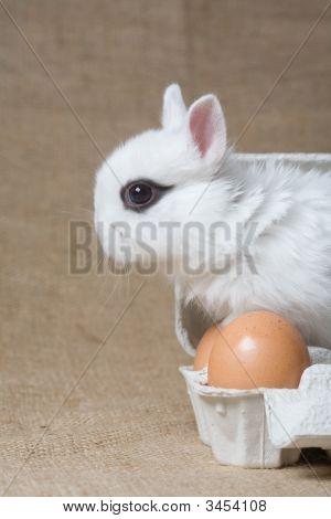 White Bunny In The Eggbox
