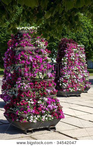 Flower Pyramids In A City Square