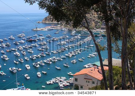 Catalina Island Avalon California