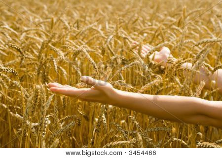 Woman Holding Out Arms Towards Wheat