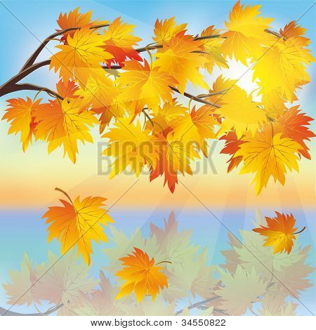 Autumn Tree Maple On Background Of Sunset