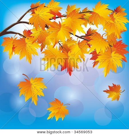 Autumn Tree Maple On Blue Background