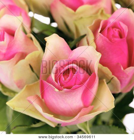 Crop Of Roses