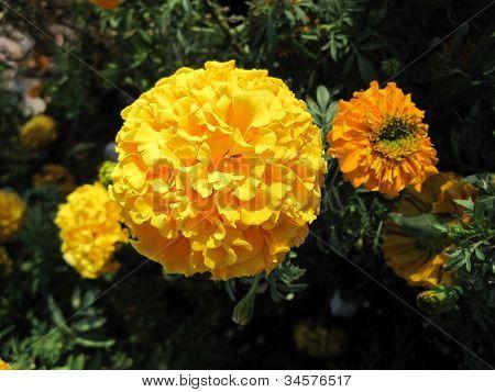Flores amarelas