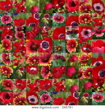 Red Flower Collection 1 - Collage