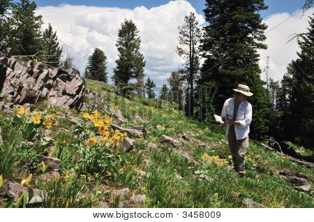 Hiker And Wildflowers