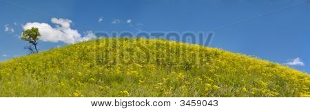 Year Solar Landscape, Flowering Hill, Rossiya, Panorama