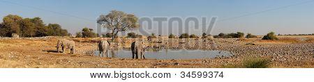 Okaukeujo Waterhole Panorama 1