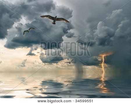 Seagulls Over Ocean