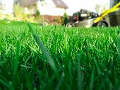 Spring Season Sunny Lawn Mowing In The Garden. Lawn Blur With Soft Light For Background. poster