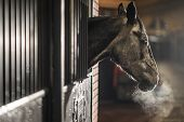Equestrian Facility. Cold Winter Time In The Barn. Mature Horse In A Stable Looking Outside Of His B poster