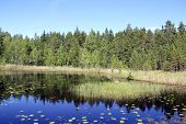 picture of marshlands  - Blue calm marshland lake Kolmpera in South of Finland at summer - JPG