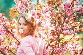 Cherry Blossom Events And Locations. Woman On Spring Cherry Blossoms Background poster