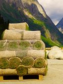 Stacks Of Sod Rolls For New Lawn. Natural Grass Turf For Installing Making New Field. Mountains Fjor poster