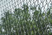 Metal Mesh Netting Close-up. Rabitz. Close Up. Background. Abstraction. Mesh Netting In Perspective  poster