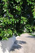 View Of A Quiet Street In A Village On A Greek Island. Selective Focus On The Branches Of Deciduous  poster