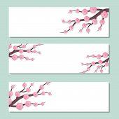 Spring Banner With Flowers. Blossom Cherry On White Background. Blossom Branch Sakura. Spring Flower poster