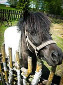 Nice Pony Stand In Surrounded By A Wooden Fence Territory poster
