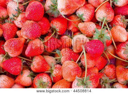 Strawberries In Thailand