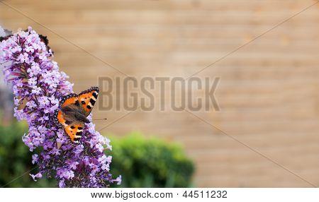 Beautiful Butterfly Sitting In The Flower