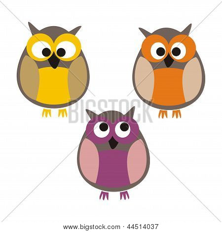Funny, staring colorful owls vector illustration isolated on white background. Cute, cartoon symbol.